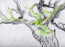 mossy welsh tree, 2004